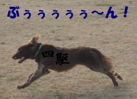 コピー ~ 4KU10DEC09 046