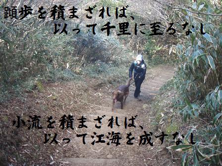 KIHO19-20DEC09 DARUMA 236