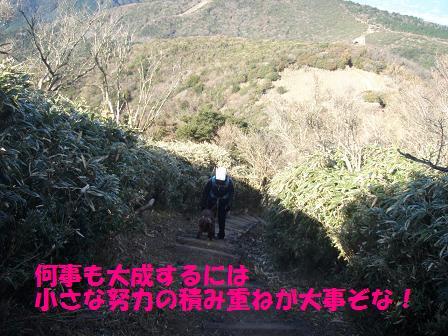 TAISEI19-20DEC09 DARUMA 251