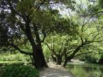 7:木々の間を抜けて
