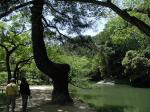 9:水辺の松