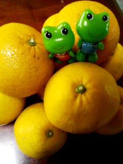 柑橘ケロちゃん