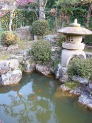 池の金魚たち