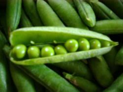 えんどう豆2