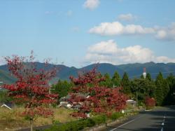 紅葉~~~~♪