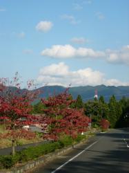 紅葉~~♪