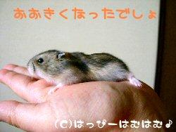 hm060328-1.jpg