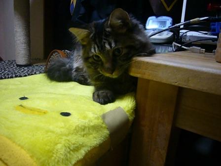 飼い主に似た猫