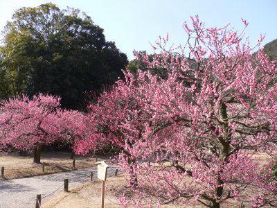 栗林公園③image