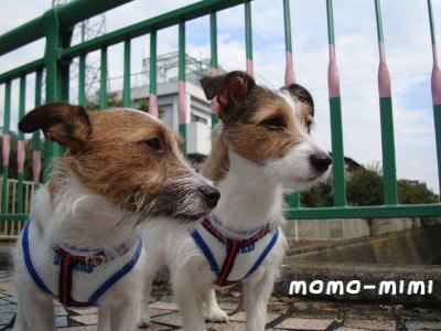 momo-mimi