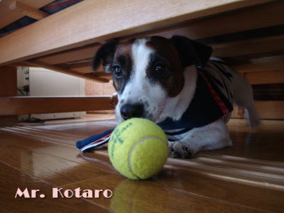 Mr.Kotaro