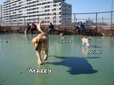 marry&momo-mimi