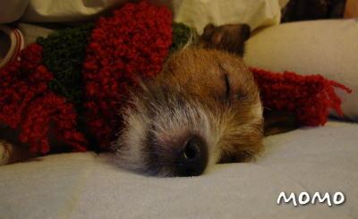 おやすみモモ。