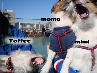 Toffee.momo-mimi