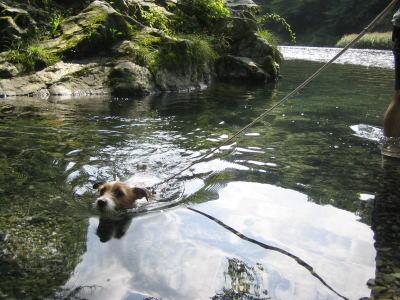 モモ初泳ぎ。