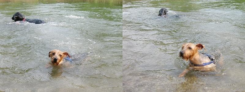 3匹物語,川