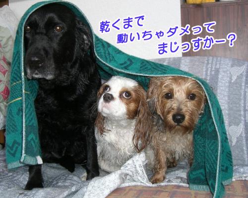 3匹物語,字余り川柳