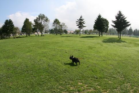 あの 芝生広場です