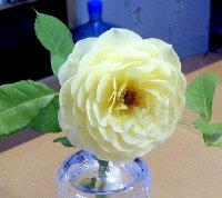 きれいな花びらの重なり