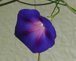 小さな花です