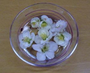 丸い花びらが可愛い