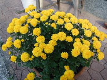 花数いっぱい