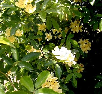 柔らかな枝に小さな花