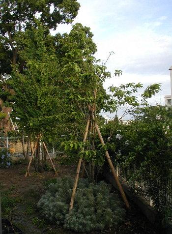 ほんとに小さな庭