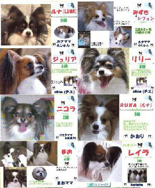 1 blog meibo1