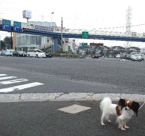 2009_10yokohama0010.jpg