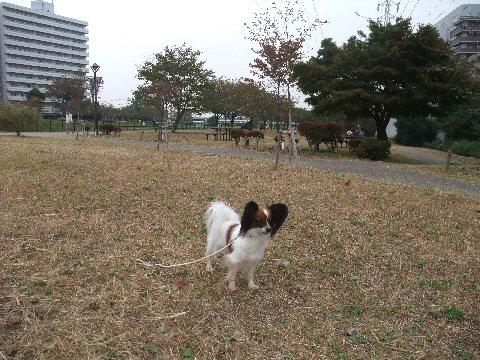 2009_10yokohama0036.jpg