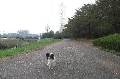 2009_10yokohama0039.jpg