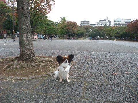 2009_10yokohama0046.jpg