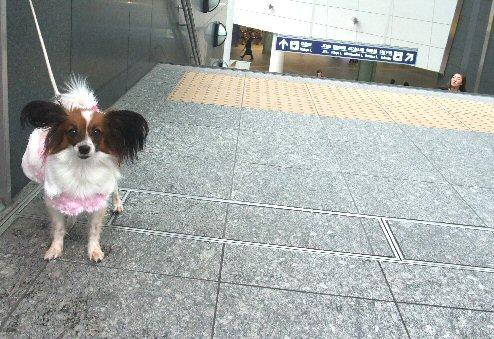 2009_10yokohama0049.jpg