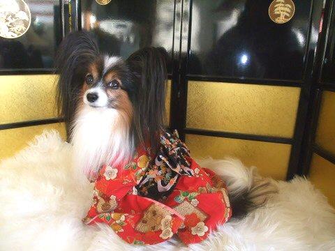 2010_0102syougatsu0055-2.jpg