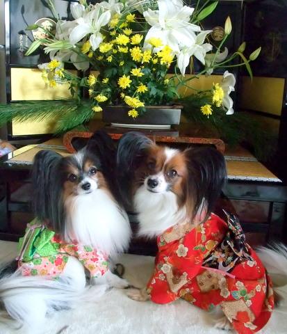 2010_0107syougatsu0025.jpg