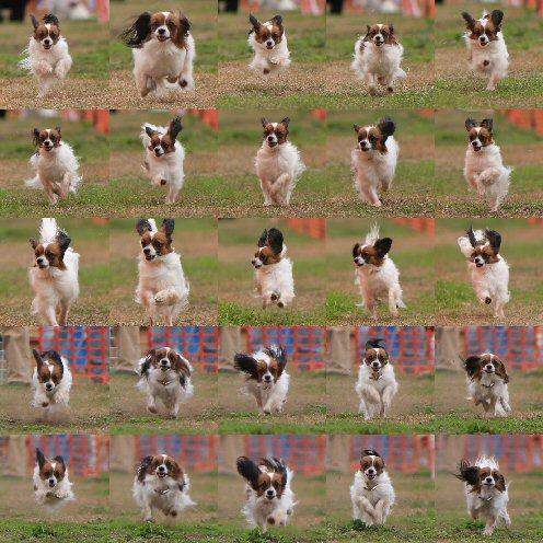 collage-3b.jpg