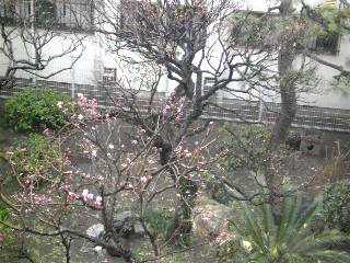 桃の花開花