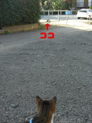 CIMG2084_20091127133517.jpg