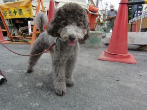 2009-10-1youchien1.jpg