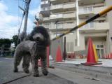 2009-10-1youchien3.jpg