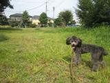 2009-10-2youchien25.jpg