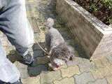 2009-9-14youchien2.jpg