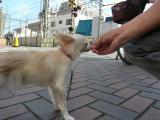 2009-9-14youchien3_20090930001217.jpg