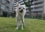 2009-9-14youchien6_20090930000011.jpg