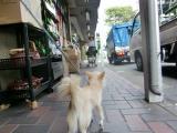 2009-9-14youchien9_20090930001208.jpg