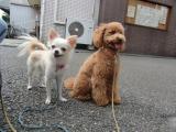 2009-9-28youchien11.jpg
