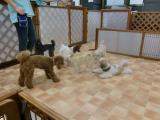 2009-9-28youchien5.jpg