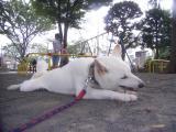 2009-9-4youchien3.jpg