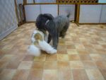 itakura410_20090922201243.jpg